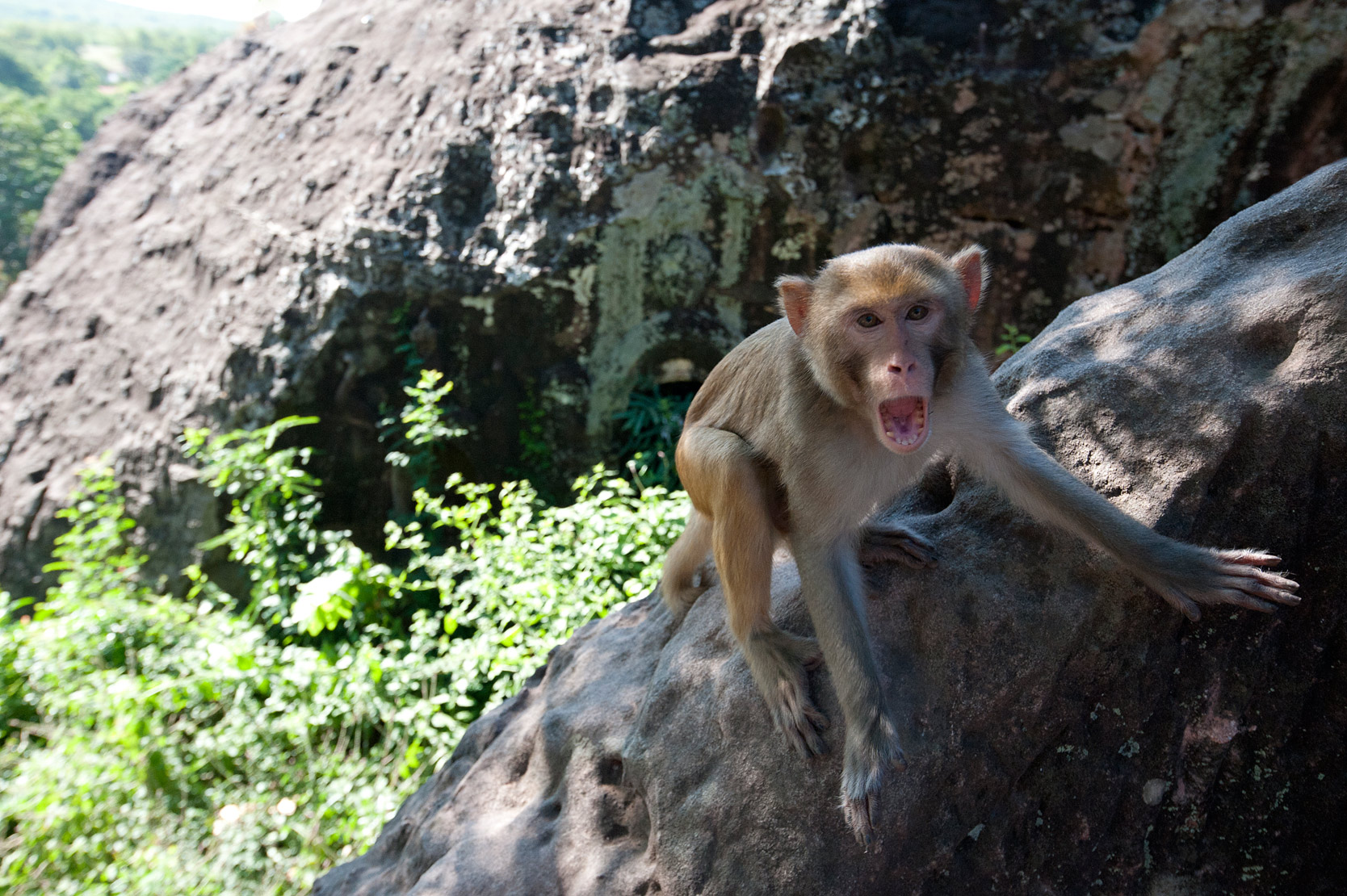 Monkey running wild on sandstone rocks in Shwe Ba Hill village, Monywa township, Sagaing Division.