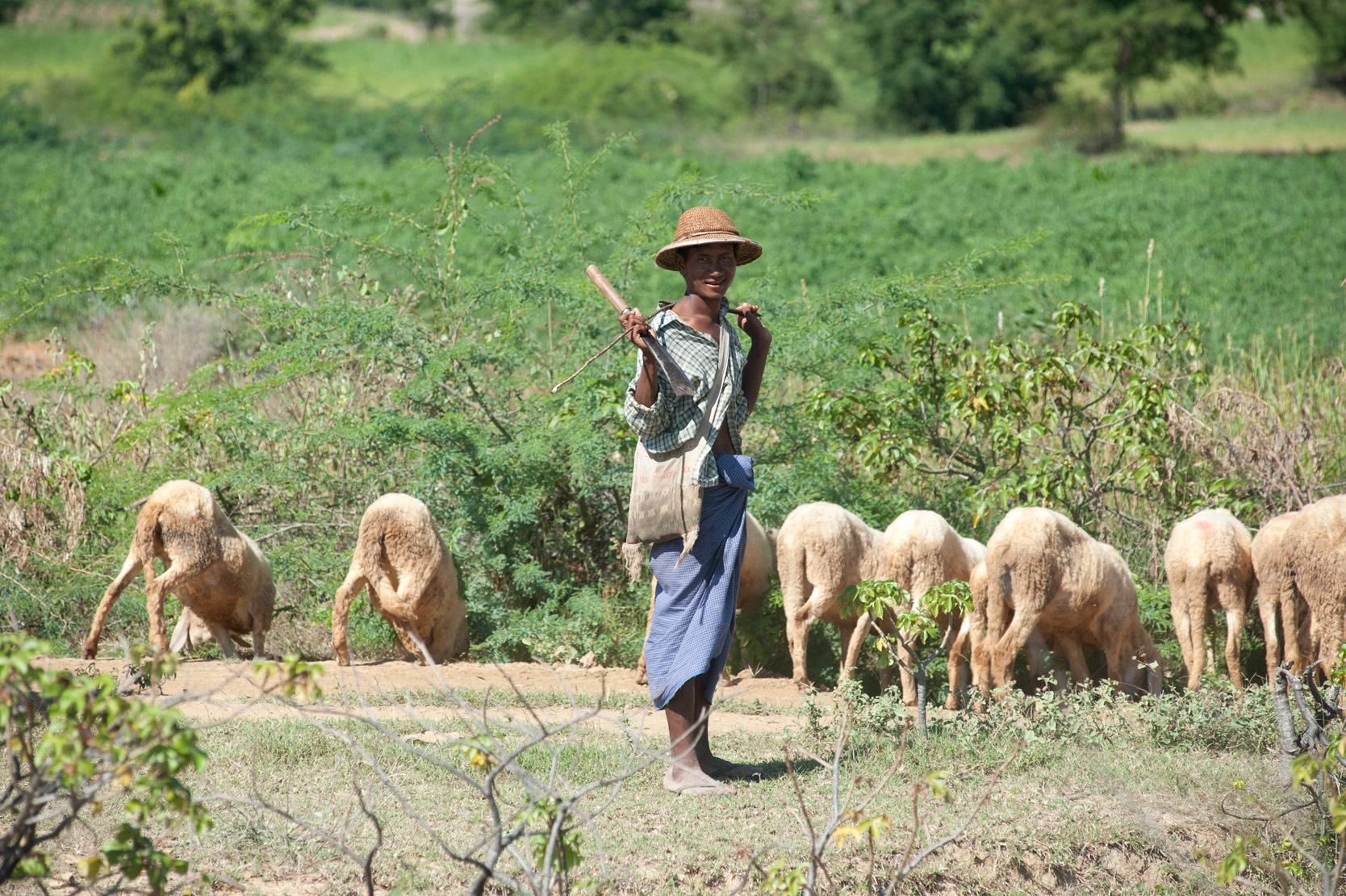 Young, barefoot shepherd in bamboo hat, and his flock, Monywa District , Sagaing Division.