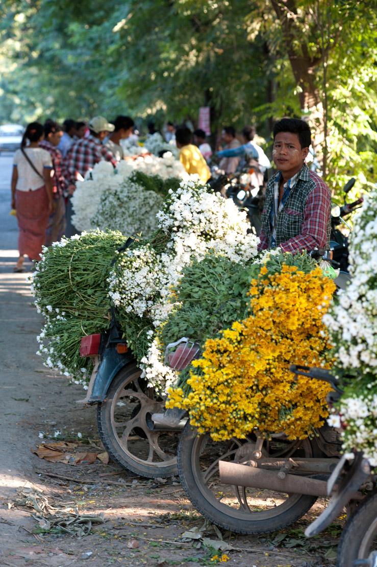 Busy roadside flower market, huge bunches of flowers sold from the backs of motorbikes along the road to Mandalay.
