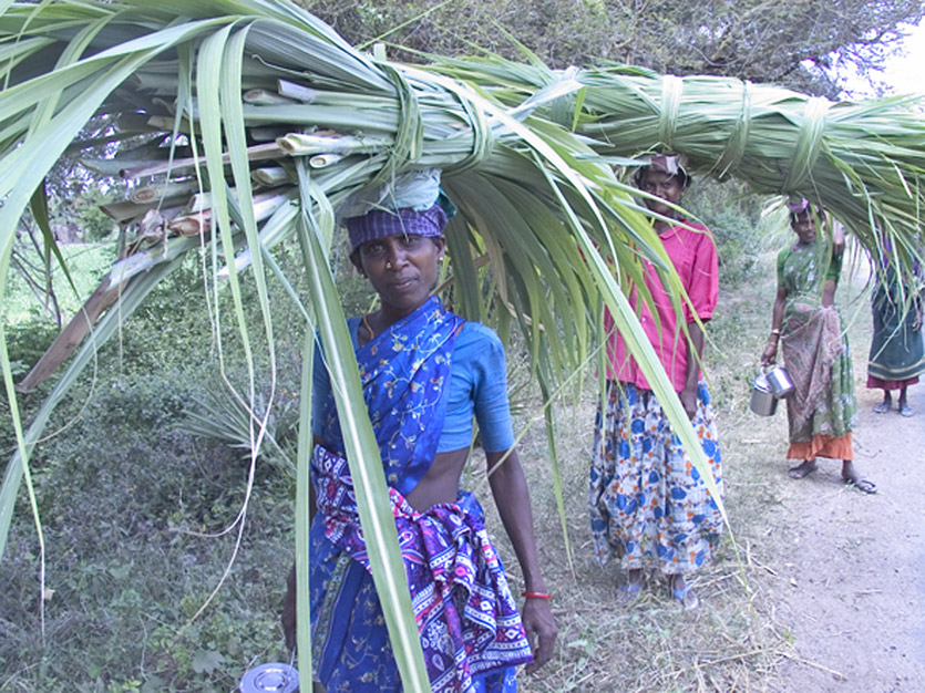 Women carying grass for animal feed, Tamil Nadu